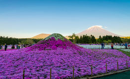Festival de Fuji Shibazakura Imagenes de archivo