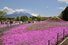 Festival de Fuji Shibazakura, Kawagujiko Japón Imagen de archivo