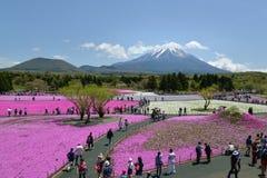 Festival de Fuji Shibazakura, Kawagujiko Japón Imagenes de archivo