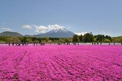 Festival de Fuji Shibazakura, Kawagujiko Japón Imagen de archivo libre de regalías
