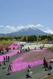 Festival de Fuji Shibazakura, Kawagujiko Japón Imágenes de archivo libres de regalías