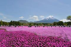 Festival de Fuji Shibazakura, Kawagujiko Japón Fotos de archivo libres de regalías