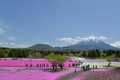 Festival de Fuji Shibazakura, Kawagujiko Japón Foto de archivo
