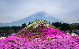 Festival de Japão Shibazakura imagens de stock royalty free