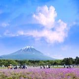 Festival de Japón Shibazakura con el campo del musgo rosado de Sakura foto de archivo