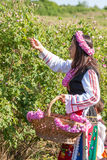 Festival de la cosecha de Rose Fotos de archivo