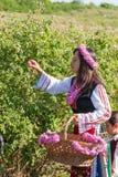 Festival de la cosecha de Rose Imagen de archivo libre de regalías