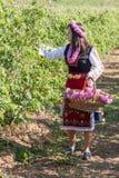 Festival de la cosecha de Rose Fotos de archivo libres de regalías