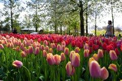 Festival de la flor en Keukenhof en la primavera en marzo de 2017 Fotografía de archivo libre de regalías
