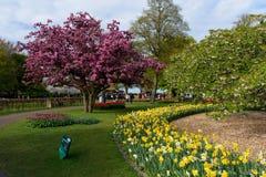 Festival de la flor en Keukenhof en la primavera en marzo de 2017 Fotos de archivo