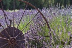 Festival de la lavanda en la granja 123 Imagen de archivo libre de regalías
