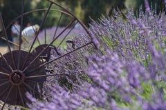Festival de la lavanda en la granja 123 Imagenes de archivo