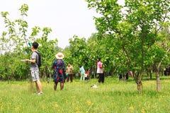 Festival de mûres Photo libre de droits