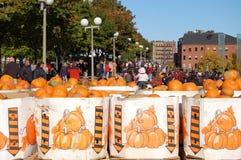 Festival de potiron de soleil de camp à Boston Images libres de droits