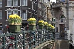 Festival de primavera de flores en Amsterdam Narcisos en una tina enfrente del edificio en el puente en el canal Imagen de archivo libre de regalías