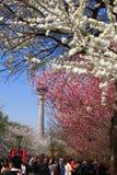 Festival de Sakura Imágenes de archivo libres de regalías