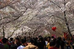Festival de Sakura Foto de archivo libre de regalías