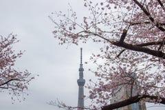 Festival de Sakura-matsuri de parc de Sumida, Taito-ku, Tokyo, Japon sur Apr7,2017 : Tokyo Skytree avec des cerisiers le long de  Photographie stock