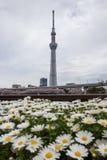 Festival de Sakura-matsuri de parc de Sumida, Taito-ku, Tokyo, Japon sur Apr7,2017 : Tokyo Skytree avec la marguerite fleurit dan images stock
