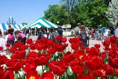 Festival de tulipe à Ottawa Photo libre de droits