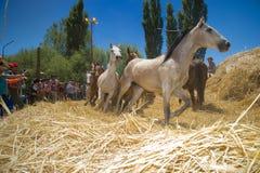 Festival del aco del ` di Ã, EL Cholar, Neuquen, Argentina fotografia stock