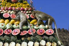 Festival del buffet della scimmia in Tailandia Fotografia Stock Libera da Diritti