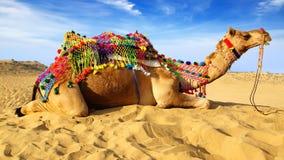 Festival del camello en Bikaner, la India Imagen de archivo