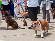 Festival del cane di Woofstock a Toronto fotografie stock