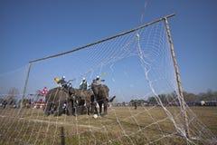 Festival del elefante, Chitwan 2013, Nepal Imagen de archivo libre de regalías