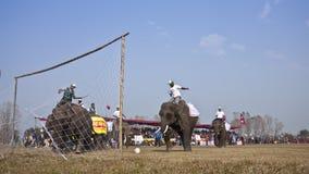 Festival del elefante, Chitwan 2013, Nepal Foto de archivo libre de regalías