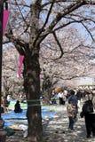 Festival del fiore di ciliegia fotografia stock libera da diritti