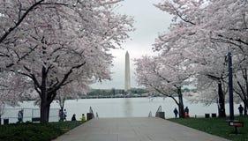 Festival del fiore di ciliegia del Washington DC Fotografia Stock Libera da Diritti