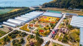 Festival del fiore di Geoje al myeon di Geoje nell'isola di Geoje, Kore del sud fotografia stock libera da diritti