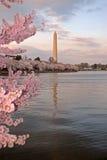 Festival del flor de cereza Fotos de archivo libres de regalías
