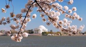 Festival del flor de cereza Foto de archivo libre de regalías