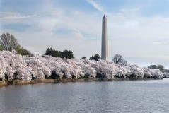 Festival del flor de cereza Foto de archivo