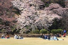 Festival del flor de cereza en Tokio Imagen de archivo