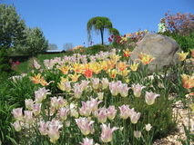 Festival del tulipán de Holanda en el 5 de mayo foto de archivo