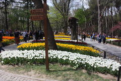 Festival del tulipán, pavo emirgan de Estambul del parque Imagen de archivo
