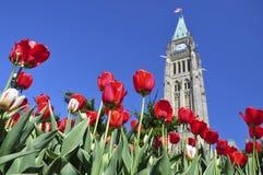 Festival del tulipano in Ottawa Fotografia Stock Libera da Diritti