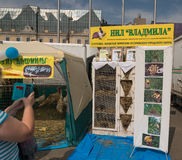 Festival dell'alimento di Primorsky al quadrato centrale Fotografia Stock Libera da Diritti