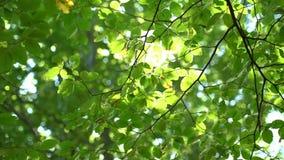 Festival des bunten des Baumes des Waldes und Grüns lässt im Sonnenlicht glühen stock video