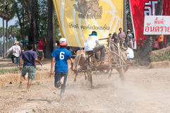 Festival di corsa del carrello della mucca in Tailandia Immagini Stock Libere da Diritti