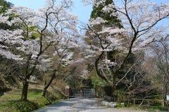 Festival di primavera a Kyoto, Giappone Immagini Stock Libere da Diritti