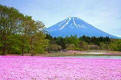 Festival di Shibazakura nel Giappone Fotografia Stock