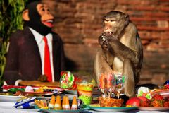 Festival do bufete do macaco em Lopburi, Tailândia Fotos de Stock