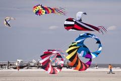 Festival do papagaio Fotos de Stock Royalty Free
