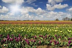 Festival do Tulip Foto de Stock