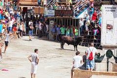 Festival dos touros e dos cavalos em Segorbe, Espanha foto de stock
