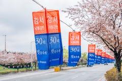 Festival ecológico de la flor de cerezo de la orilla de Nakdonggang del parque de Daejeo en Busán, Corea imagen de archivo libre de regalías